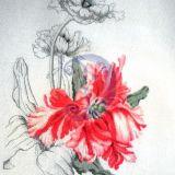 Raudona tulpė