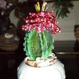 Kaktusas zydi