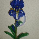 Irisas