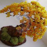 rudeninis bonsas