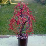 raudonas