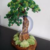 žaliasis bonsas