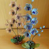 Orchidejos (52-53cm)