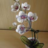 """Orchideja """"Vidmante"""" 41cm"""