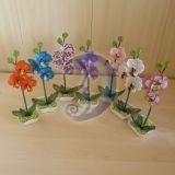 mini orchidejos