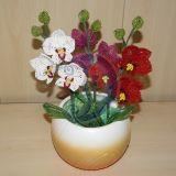 """Mini orchidejos """"3in1"""" 27x21cm"""