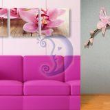 Orchideja interjerui