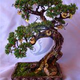 Pinigu medis