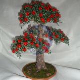 zydintis bonsas