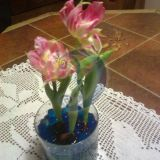 Tulpės žele rutuliukuose