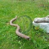 Medinė gyvatė