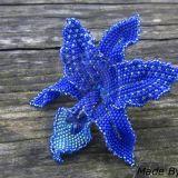 Mėlyna orchidėja