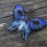 Mėlynasis drugelis2